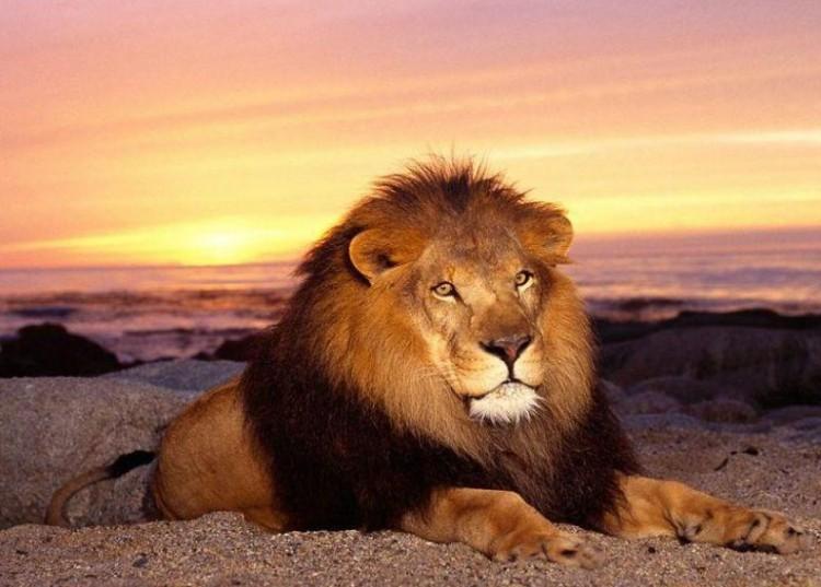 aslan1